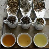 Bedtime drink: Cups of exotic Golden Tips (left), Silver Tips (center) and Japanese 'sencha' tea are displayed at a factory in Kandana, on the outskirts of Colombo, in mid-March. Sri Lanka is now marketing its most profitable export as a luxury boost for the libido. | AFP-JIJI