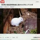 Mutant rabbits, economic meltdowns and nuclear tourism