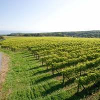 Top of the crops: Vineyards in Hokkaido's Sorachi Subprefecture, such as those belonging to Tsurunuma Winery  and Yamazaki Winery (below right), thrive thanks to the region's cool climate, while the vast expanses of available land help keep prices low.