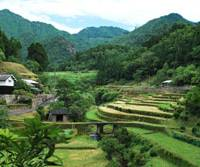 Lonely idyll: Ikari in the Kumano mountains of Mie Prefecture was once a thriving village, but now only 93-year-old Chiune Matsuda (below), his wife, brother and his brother's wife are left there to hold back the ever-encroaching forest. | YOSHIKO MIYAMOTO (above); WINIFRED BIRD PHOTOS