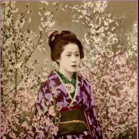 A1890s photo of a Tokyo geisha. | ROB OECHSLE COLLECTION