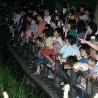 Lighten up: Children watch fireflies by the Tsuri River in Fussa at a previous festival.