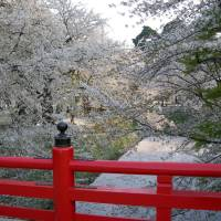 It's not too late for <em>hanami</em>