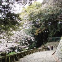 Sakura steps: Blossom over the 1,159 steps up to Kunozan Toshogu Shrine.