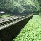 Beat the heat in the green hills of Izu