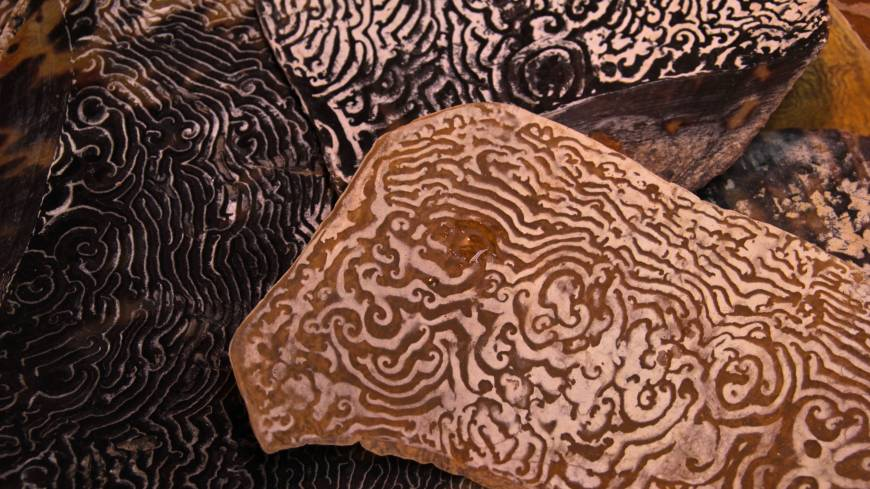 Natural patterns on the inner sides of sea-turtle plates are as lovely as any human carvings.