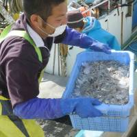 Ibaraki fishermen go after whitebait for first time since nuclear disaster