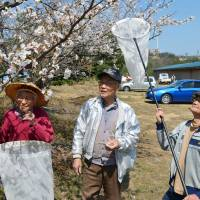 Keeping up on the buzz: Chizuko Nozaka (left), Tadao Murota (center) and Hideyoshi Kurokawa gather near Lake Kitagata in Awara, Fukui Prefecture, on April 5 to collect bees as part of their research into the insect's habitat. | KYODO