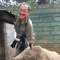 Hands-on experience: Freelance photographer Tomoaki Nakano plays with a baby rhinoceros Oct. 10 in South Africa. | KYODO