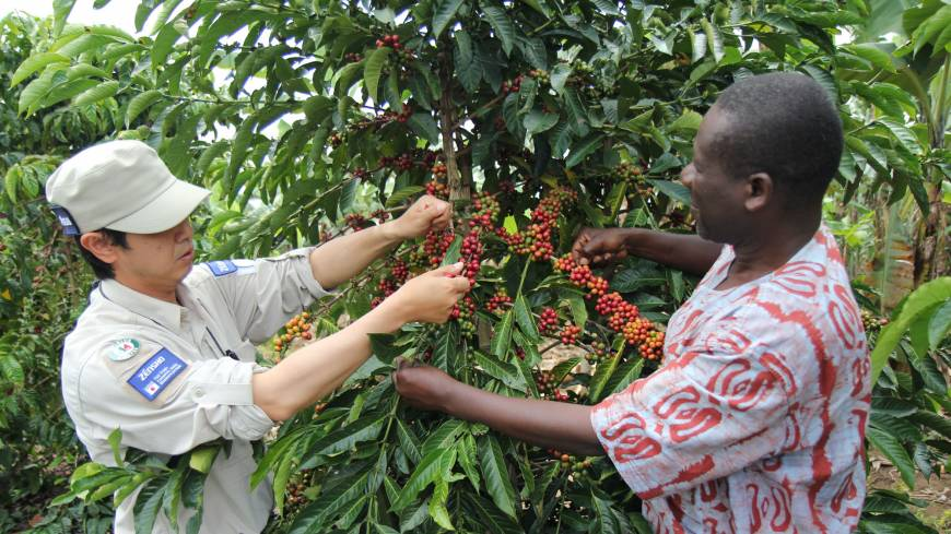 A cafe business manager checks coffee beans in Bushenyi, Uganda, in June 2012.
