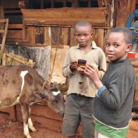 Boys drink milk from artificially inseminated cows in Rukuriri, Kenya, in October 2011. | ZENSHO HOLDINGS CO.