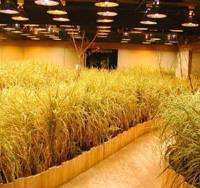 Underground rice paddies in Otemachi
