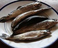A plate of fresh river char caught by our forester, Mr. Matsuki, who kindly presented the fish to me.