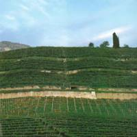 Italian vineyards to Japanese tables: The province of Trento (or Trentino), one of the regions of Italy from which K.K. Vinarius directly imports wine.