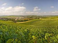 Great terroir: The French vineyards of Chablis, between Paris and Beaune, produce Burgundy wines, many of which make ideal pairings with picnic dishes. | IMAGES COURTESY OF LA CHABLISIENNE