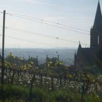 German Rieslings: a light, dry delight