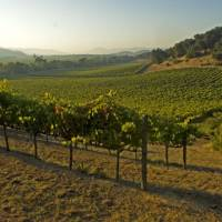 It's down to earth in the Napa Valley
