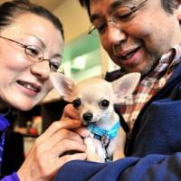 Japan's love affair with dogs and cats