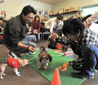 Dogwatch: Owners and their puppies at the Plus Wan! event on Jan. 30. | YOSHIAKI MIURA PHOTO