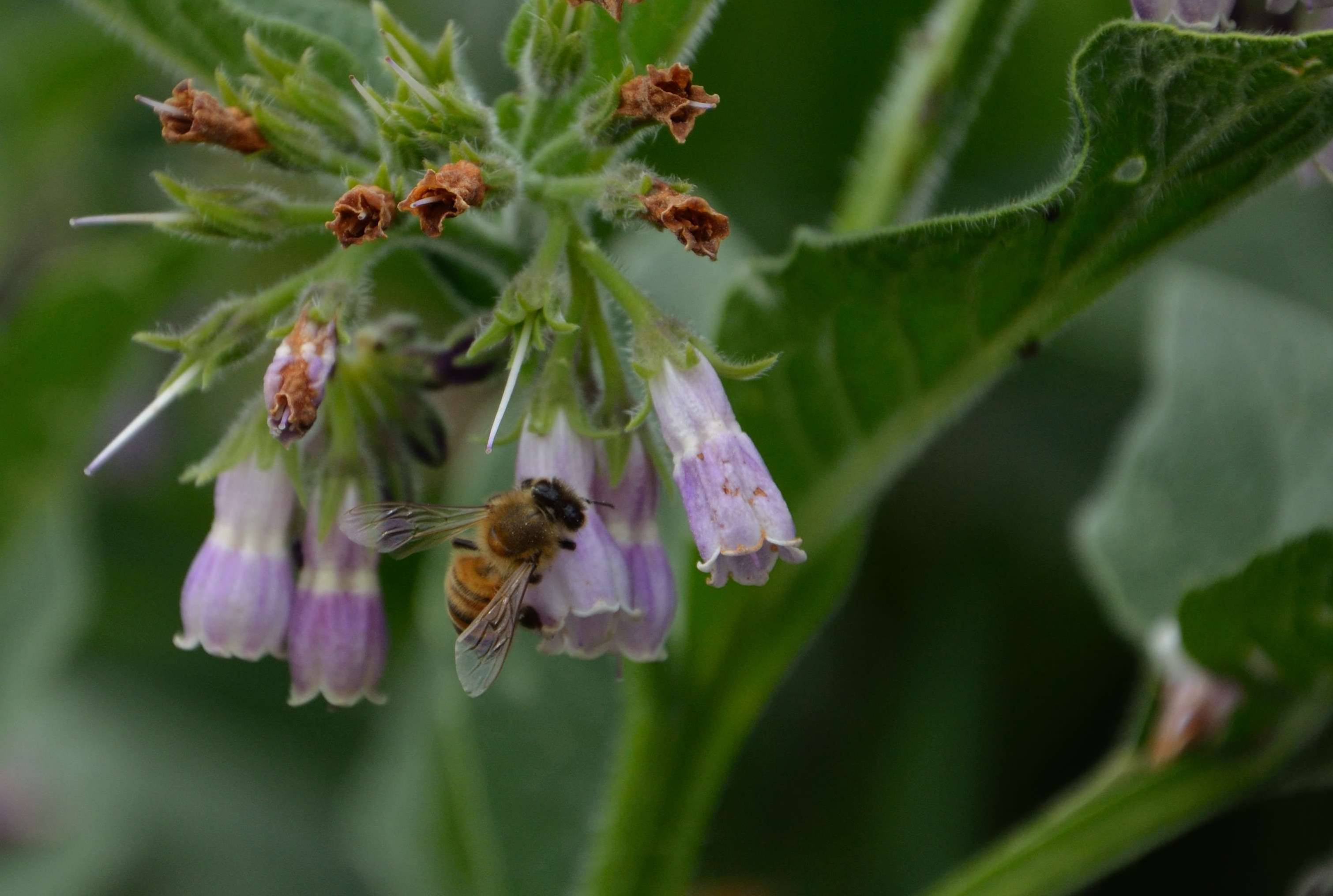 Insecticides pit trees against bees