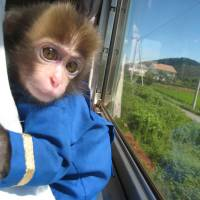 Train company to monkey around with riders