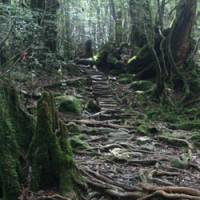 Deep arbor: The Shiratani Unsuikyo parkland in northern Yakushima.