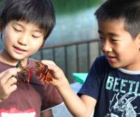 Claws bared: Hiroki Furumoto and Yuto Matsuzaki, both 9, measure the crawfish they have caught in the Yokojukken River.