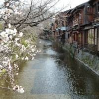 Flowers of Kyoto: The beautiful, little-visited area around the Shirakawa stream lined by teahouses, cherry and willow trees. | LESLEY DOWNER PHOTO