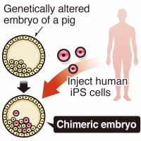 Animal-human embryo test clears first hurdle