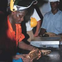 Gold rush: A worker checks a gold bar at the  Tarkwa mine in Ghana. In a series of raids since June, a Ghanaian task force has arrested 571 Chinese nationals for illegal gold mining and more than 4,500 Chinese have left the country. | BLOOMBERG