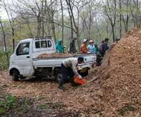 Let's chip: Volunteers from Amway and our chief forester, Mr. Matsuki (to the fore), load his little tipper truck with woodchips from thinned-out trees prior to spreading them in our Afan Woodland to make eco- friendly walkways for staff and visitors alike. | C.W. NICOL