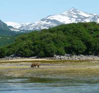 Born free: A Brown bear and its cub in the splendor of Geographic Harbour, Alaska | MARK BRAZIL PHOTOS