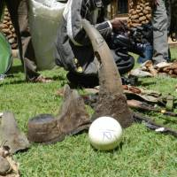 Ivory, rhino horn, a leopard skin and ostrich egg seized at Mombasa port en route to China. | PHOTO COURTESY OF MARA CONSERVANCY