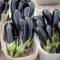 We all deserve eggplants in fall
