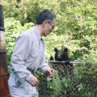 Fenced in: Bear researcher Kazuhiko Maita is eyed up by a bear that's in open woodland in Hiroshima Prefecture. | KAZUHIKO MAITA