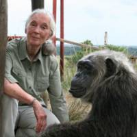 Monkey business: Primatologist Jane Goodall poses with a rescued chimpanzee named La Vielle at the Jane Goodall Institute's Tchimpounga Chimpanzee Rehabilitation Center in the Republic of Congo in 2006. | © THE JANE GOODALL INSTITUTE