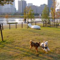 In Tokyo, nothing is too good for your pet