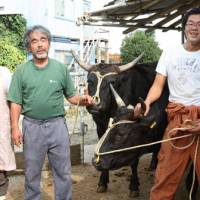 Raising the steaks: Yoshinori Nakanishi (center) at his farm with his wife Eiko and son, Hitoshi. | COURTESY OF YOSHINORI NAKANISHI