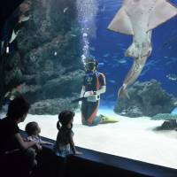 Here's looking at you: Young visitors enjoy watching a Sunshine Aquarium staff member swimming with sharks. | JASON JENKINS