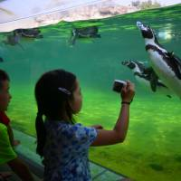 Underwater worlds: Up close with the penguins at Tokyo Sea Life Park.