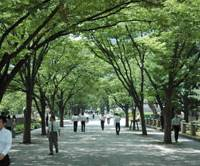 Walking Osaka's 'aquapolis' ways