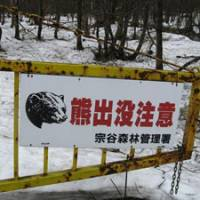 Proceed with care: In the Sarufutsu area, along with many parts of Hokkaido and many upland areas elsewhere throughout the archipelago, bears are the dominant species other than Homo sapiens.