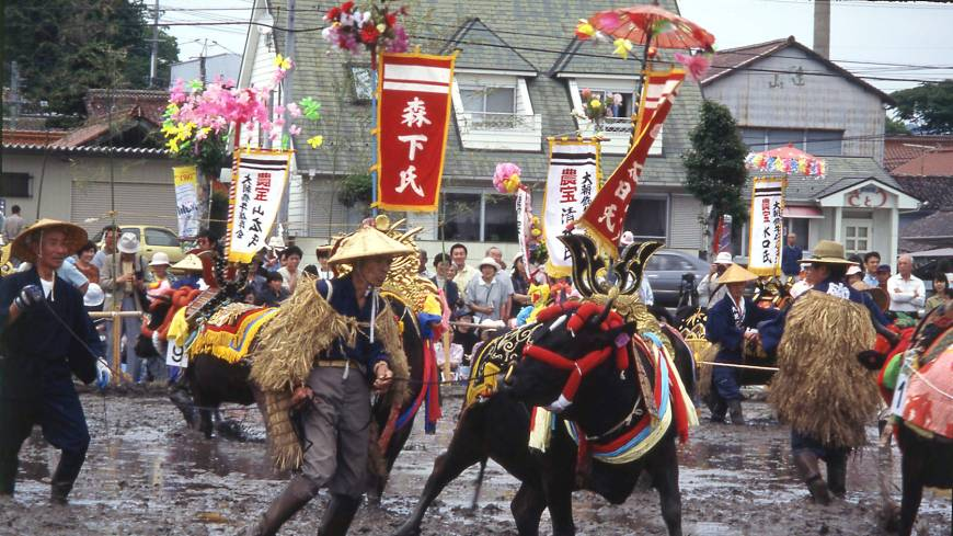 Reluctant cows meekly follow the bovine star of the Mibu no Hana Taue Matsuri rice-planting festival, whose origins are lost in the mists of time.