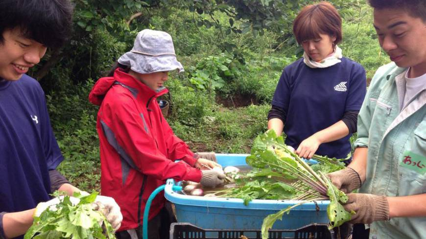 Fresh crop: Members of Wakamono Nouentai prepare shipments of freshly picked beats at a farm in Chiba Prefecture in June.