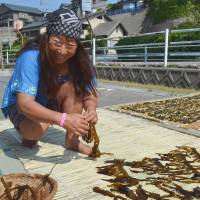 Hand-picked: Nayomi Oi, an 'ama' female diver, spreads out some 'wakame' (seaweed) she harvested in Sakai, Fukui Prefecture, in May 2013. | KYODO