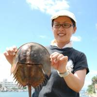 Disappearing: Marine life expert Mari Shuno holds a horseshoe crab earlier this month on a tideland in Fukutsu, Fukuoka Prefecture. | KYODO