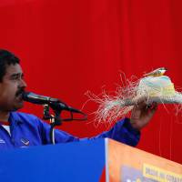 Feathered friend: Nicolas Maduro, then acting  Venezuelan president, holds up a farmworker's hat with a bird perched on top during an election campaign rally in Catia La Mar on April 9. A week earlier, Maduro assured another rally that late President Hugo Chavez had appeared to him as a small bird to give him his blessing for the top job. | AP