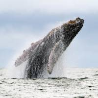 Out in the cold: The waters around the Antarctic are home to some 16,000 known species, including whales. | AFP-JIJI