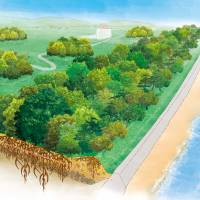 Ways of seeing: The Great Forest Wall Project in years to come. | GREAT FOREST WALL PROJECT