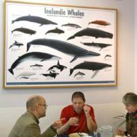 Whale of a time: Customers dine at a restaurant in Reykjavik that serves whale meat. | KYODO PHOTO